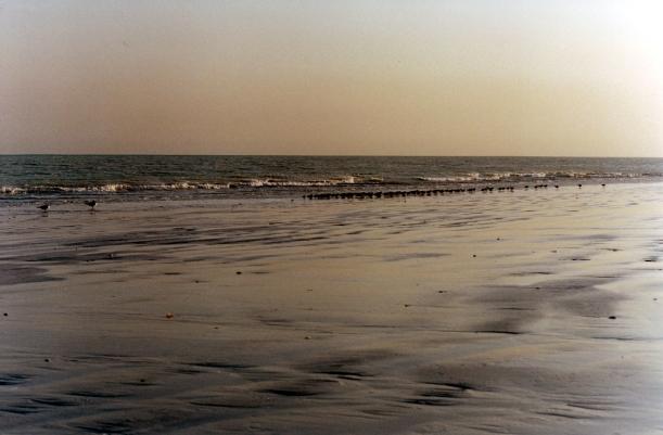 09-11-2000 bird lineup 80 mile beach.jpg