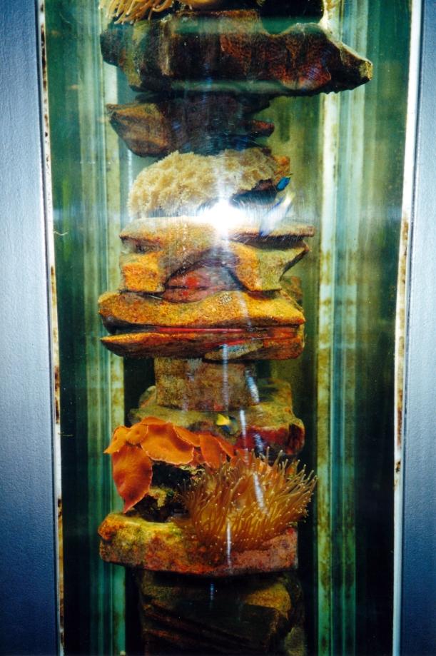 10-05-2000 marine life colonizing rig.jpg