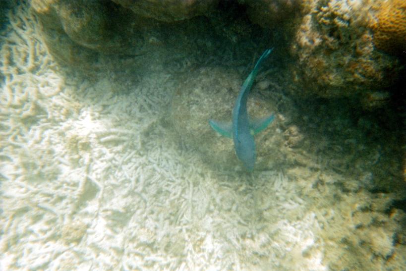 10-28-2000 blue fish.jpg