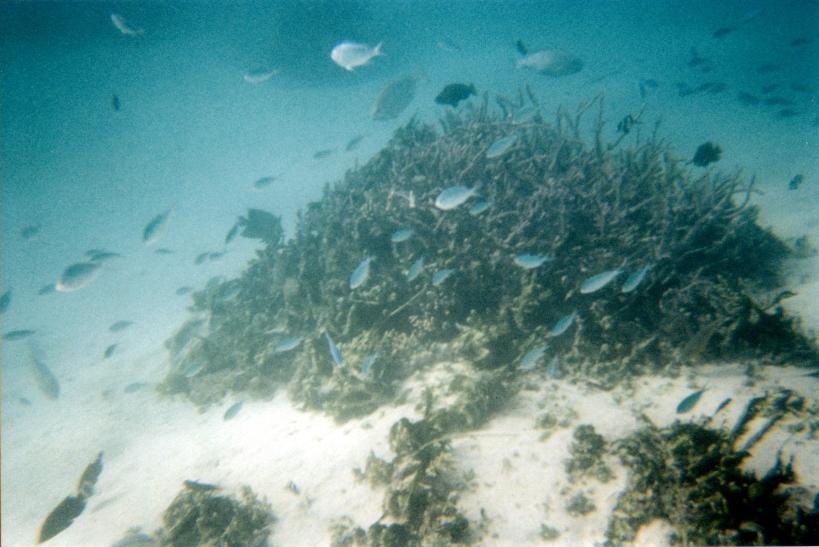 10-28-2000 lots fish.jpg