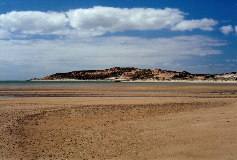 11-08-2000 shark bay wh area.jpg