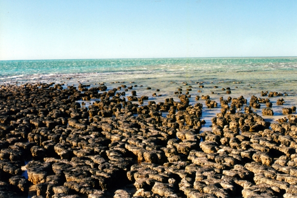 11-09-2000 06 stromatolite view Hamelin Pool.jpg