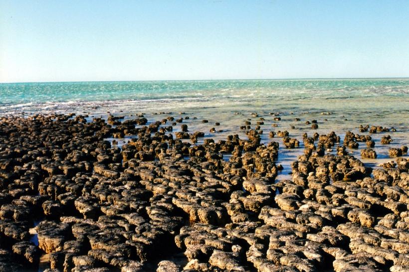 11-09-2000 06 stromatolite view Hamelin Pool.jpg