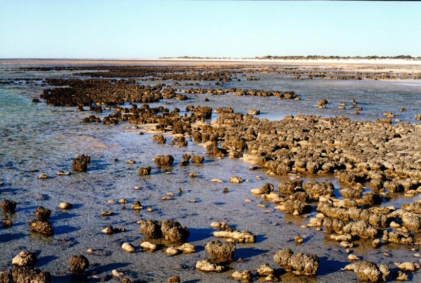 11-09-2000 07 Hamelin stromatolites and beach.jpg