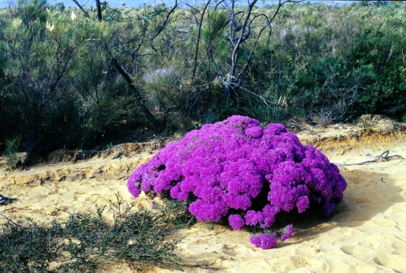 11-16-2000 15 wildflowers.jpg