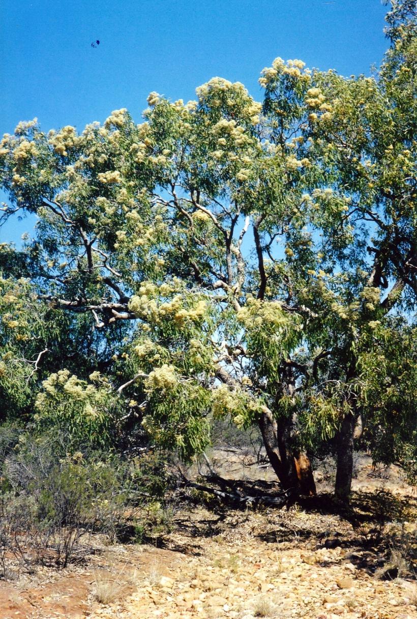 09-25-2001 blossom.jpg