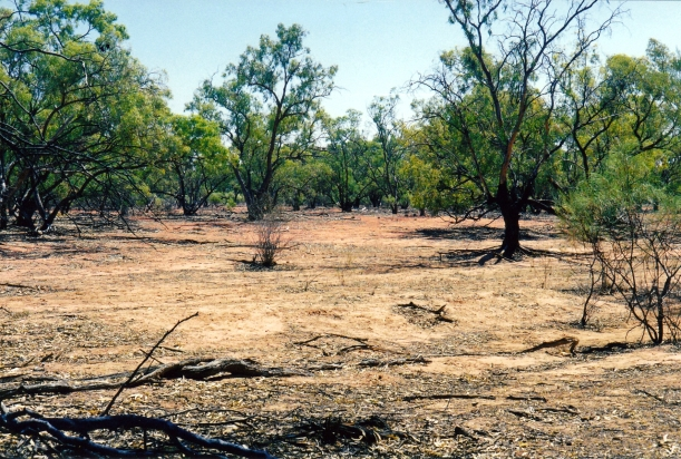 09-26-2001 flood plain by Paroo.jpg