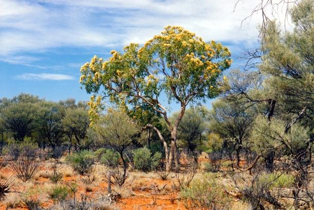 09-30-2001 bush yowah.jpg