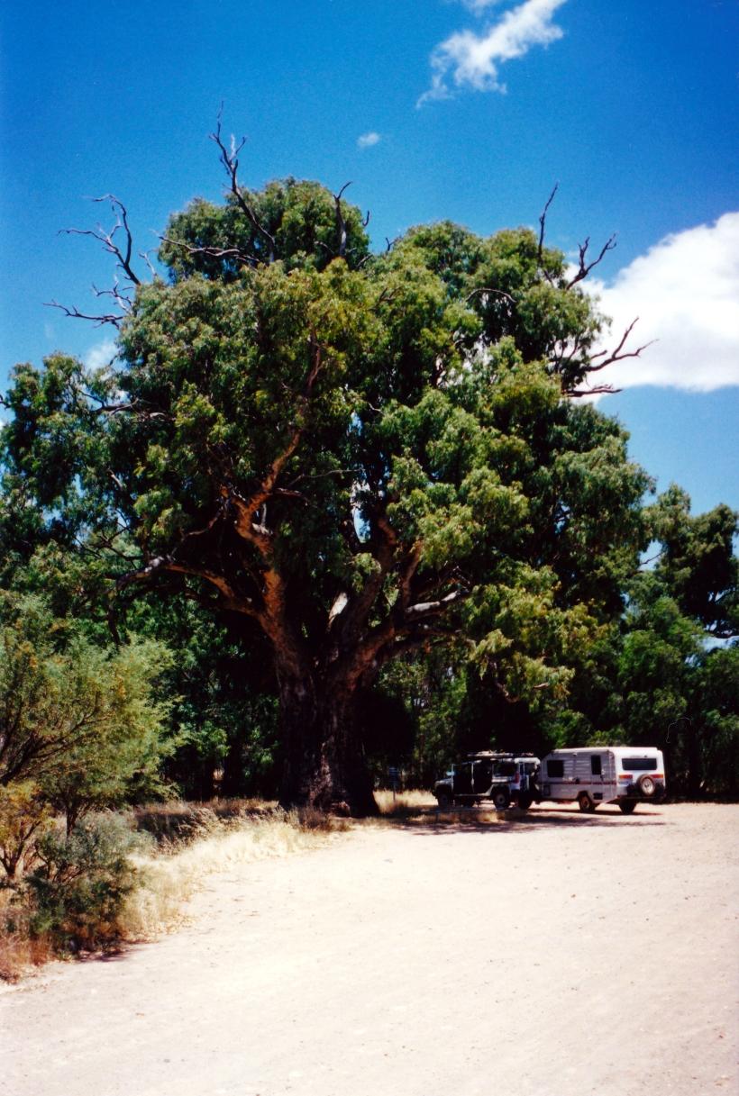 12-12-2000 tree.jpg