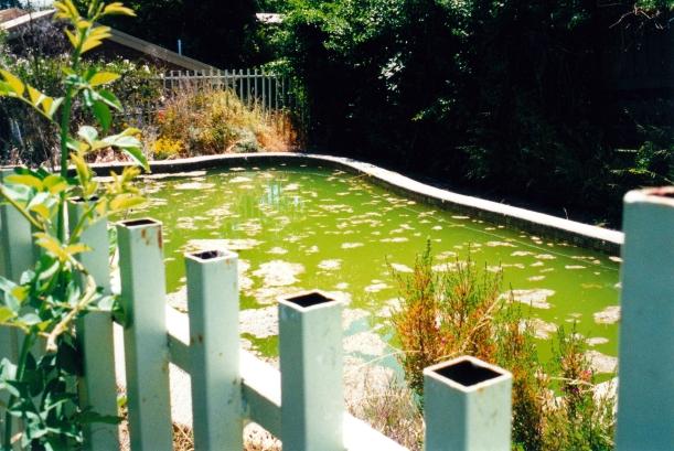 12-15-2000 pool.jpg