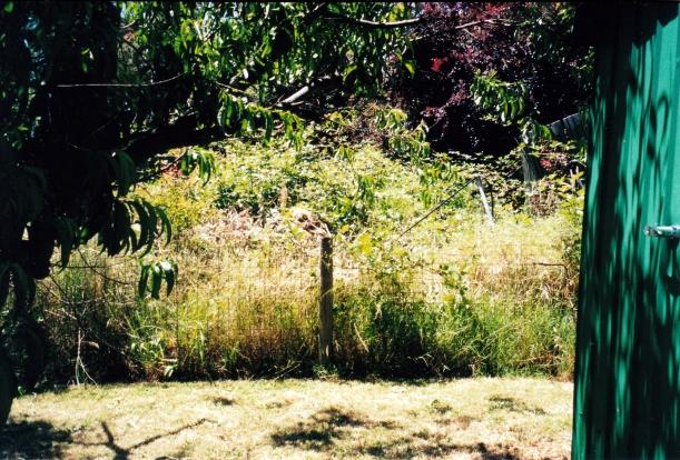 12-15-2000 vegie patch.jpg