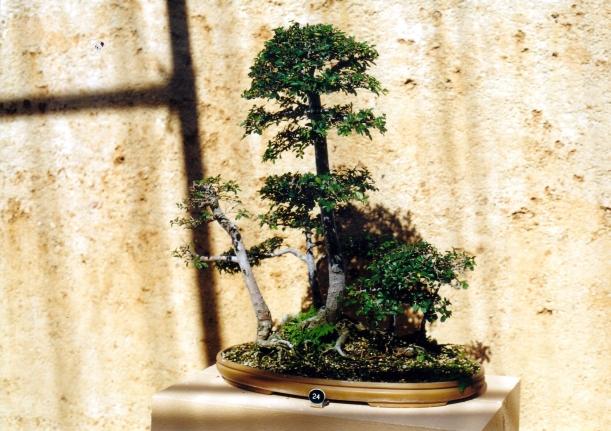 04-19-2002 bonsai.jpg