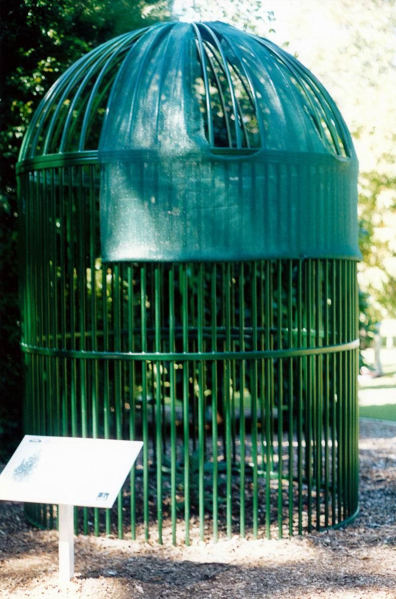 Resize of 04-21-2002 wollemi pine.jpg