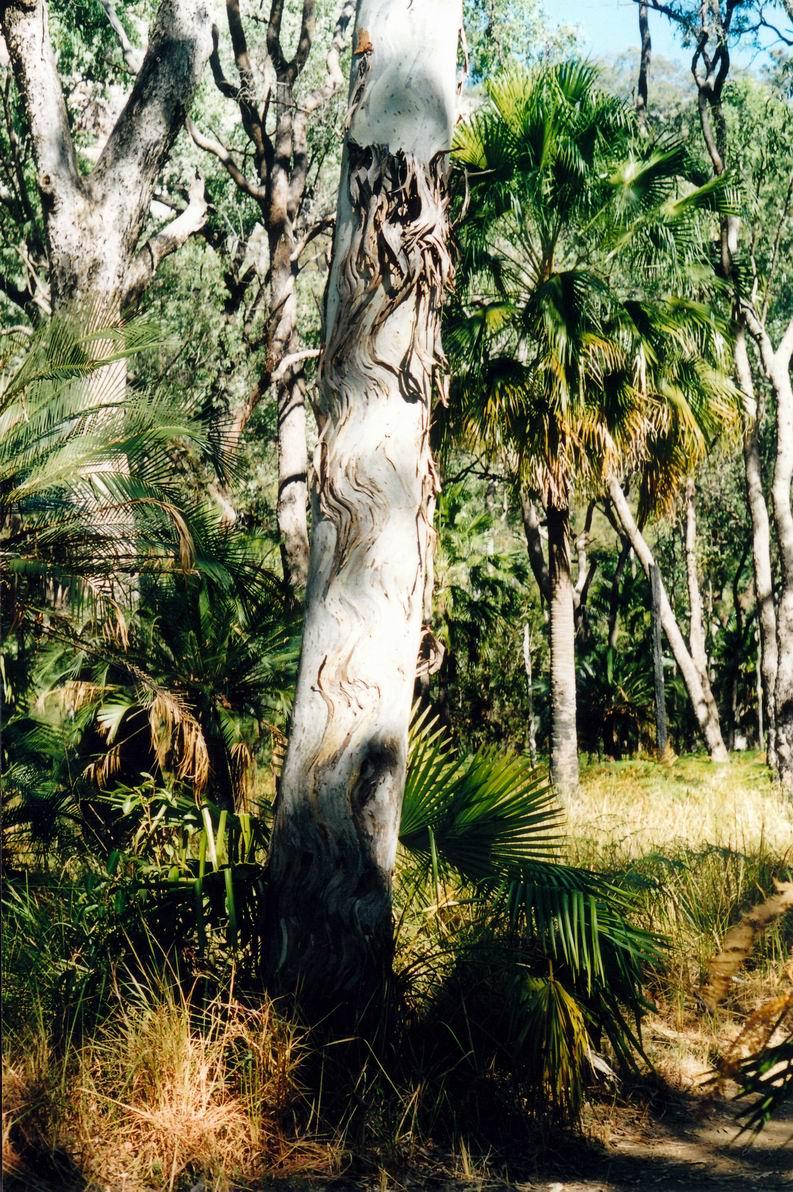 Resize of 04-30-2002 03 bark patterns.jpg