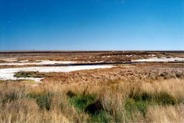06-03-2002 06 Elizabeth Springs mound springs.jpg
