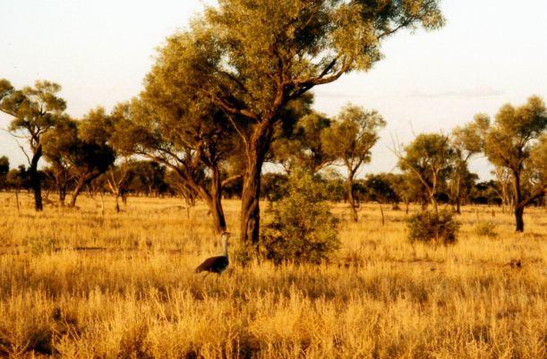 Resize of 05-24-2002 plains turkey