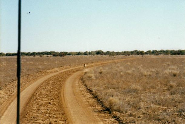 Resize of 05-31-2002 dingo dust.jpg