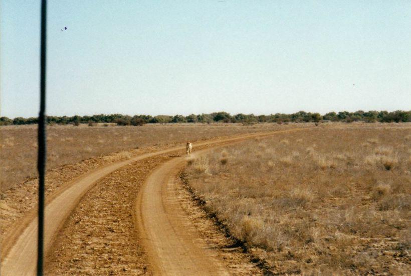 Resize of 05-31-2002 dingo dust.jpg