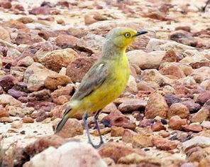 Resize of 05-31-2002 gibber bird.JPG