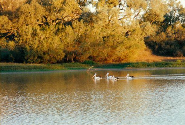 Resize of 06-02-2002 pelicans.jpg