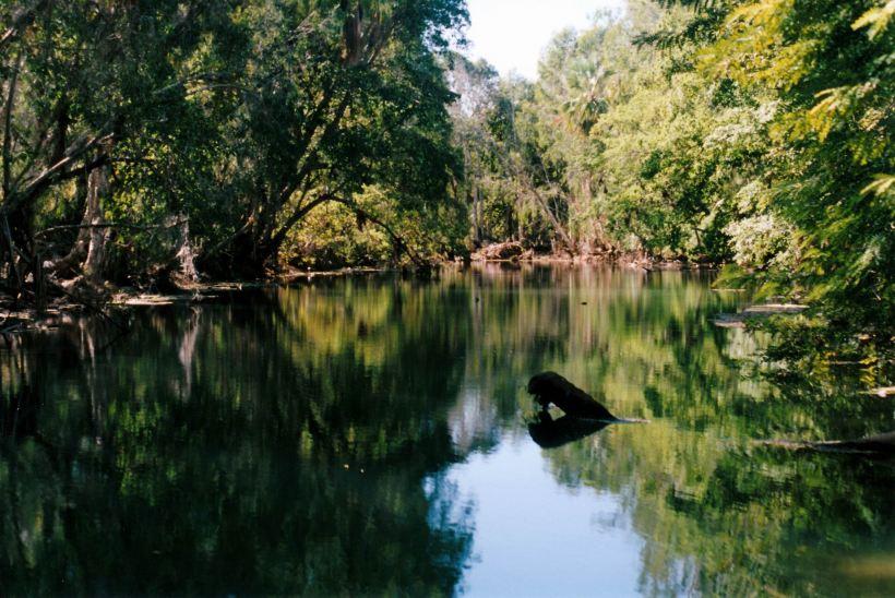 Resize of 06-30-2002 01 Adels grove waterhole on Lawn Hill Creek.jpg