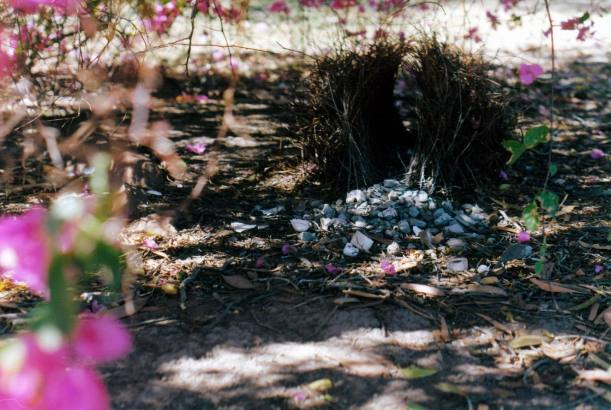 Resize of 08-11-2002 05 bower at Hells Gate RH with flowers.jpg