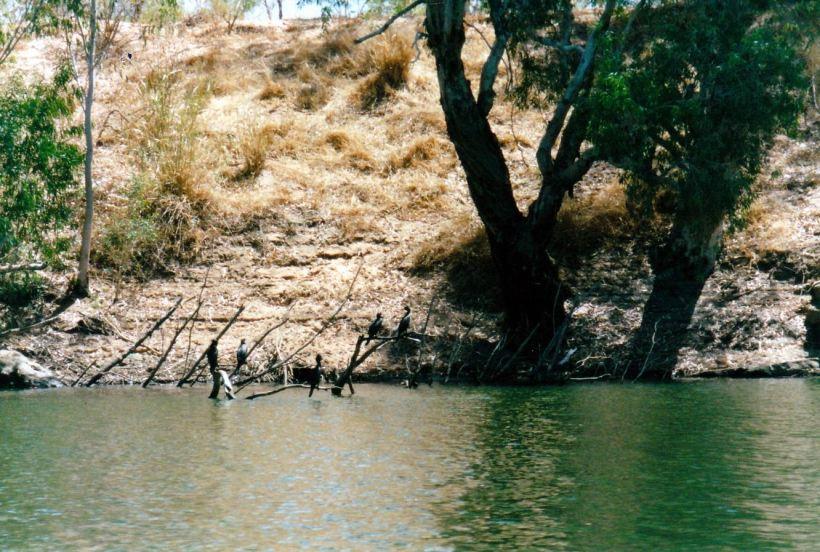 Resize of 09-17-2002 birds