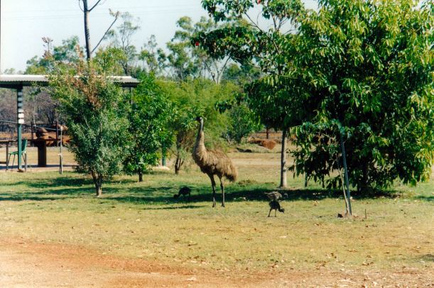 Resize of 10-04-2002 02 daddy emu Bedrock Village.jpg