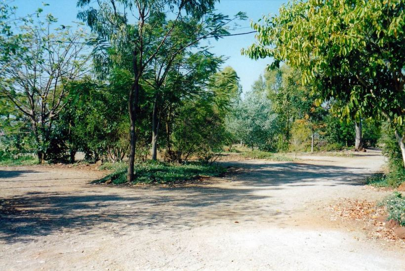 Resize of 10-04-2002 bushes grown at BV.jpg