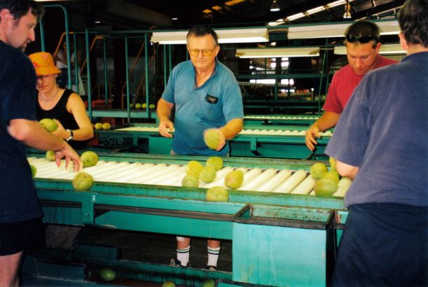 Resize of 11-24-2002 02 John sorting mangoes.jpg