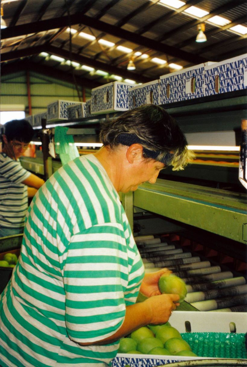Resize of 11-24-2002 04 mango packer.jpg