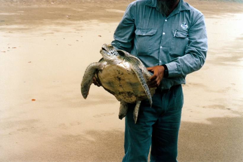 Resize of 12-11-2002 01 turtle rescue .jpg