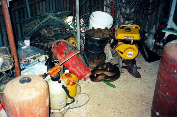 Resize of 05-17-2003 olive python in shed.jpg