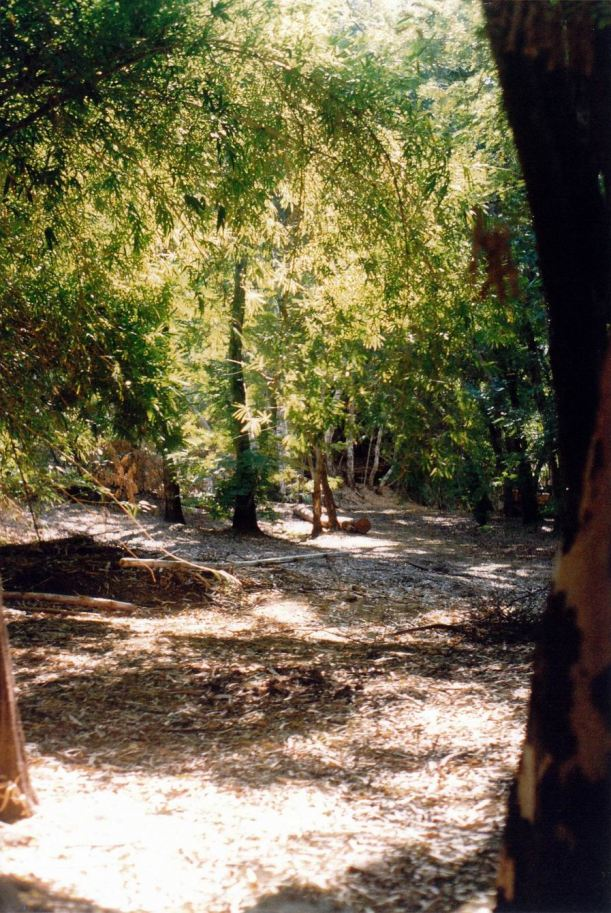 Resize of 06-01-2003 04 Grove still fairly unspoiled.jpg
