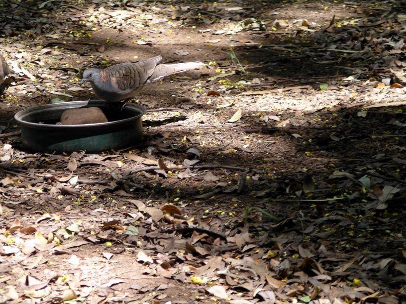 Resize of 4-6-2005 bar shoulder doves Adels 2