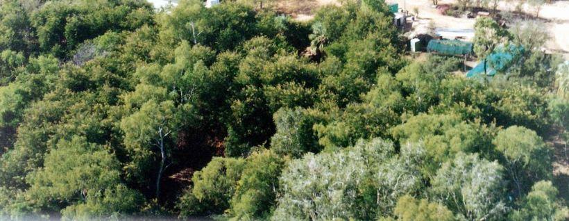 Resize of 06-29-2003 19 veg garden & Grove.jpg