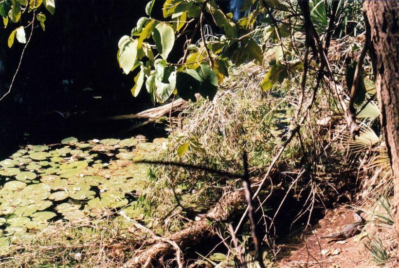 Resize of 08-30-2003 little croc on c range walk.jpg