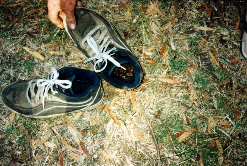 Resize of 09-15-2003 06 shoes left outside overnight.jpg
