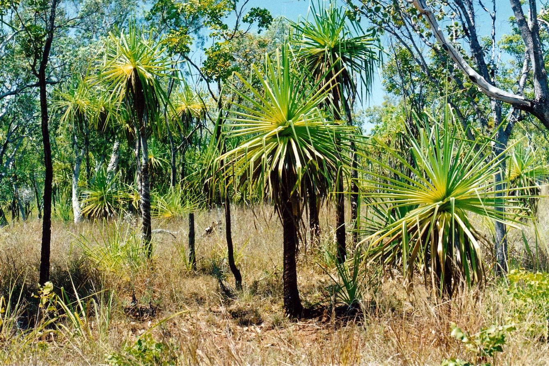 resize of 09-19-2003 10- scene near safari camp