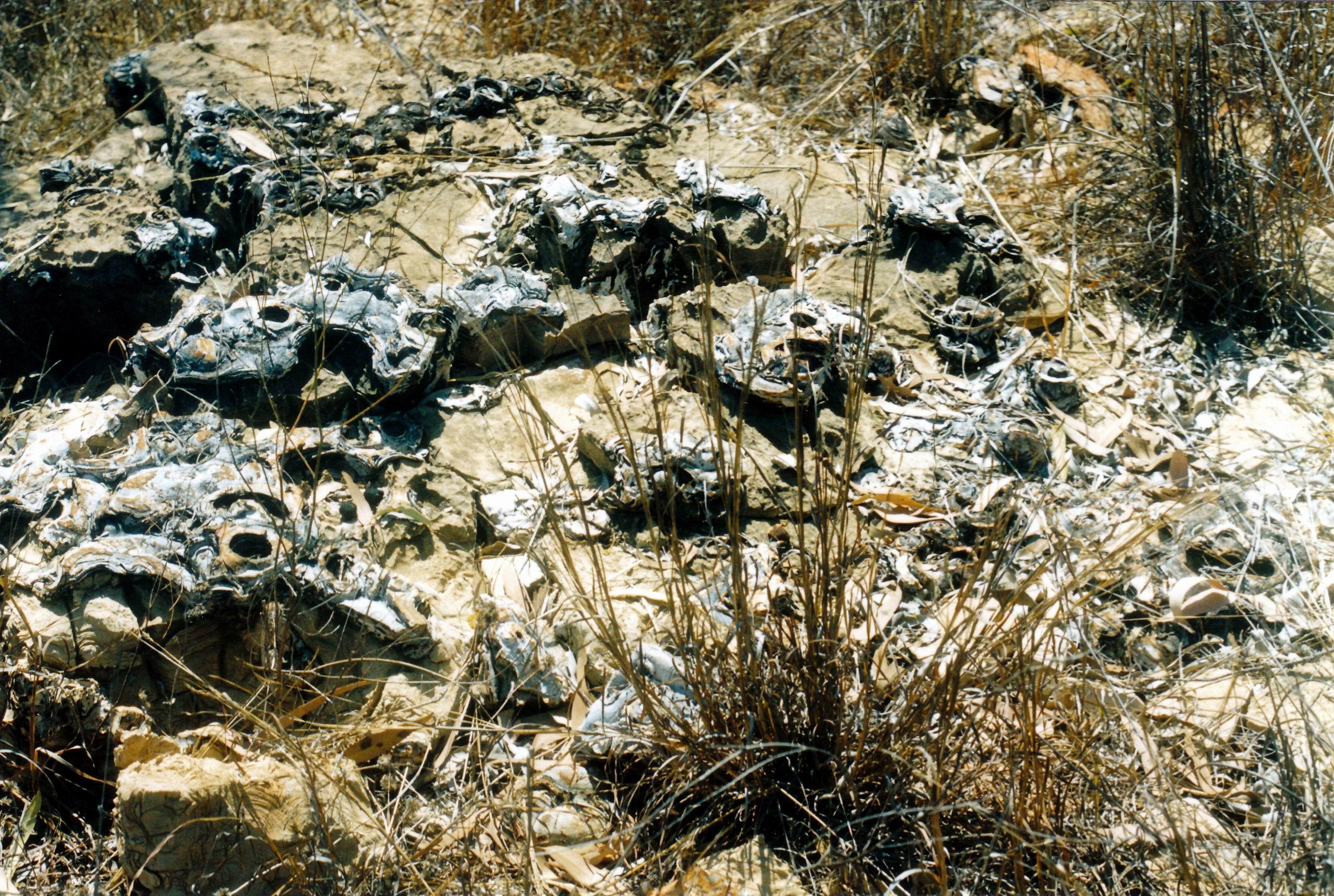 Resize of 09-19-2003 27 many more stromatolites.jpg