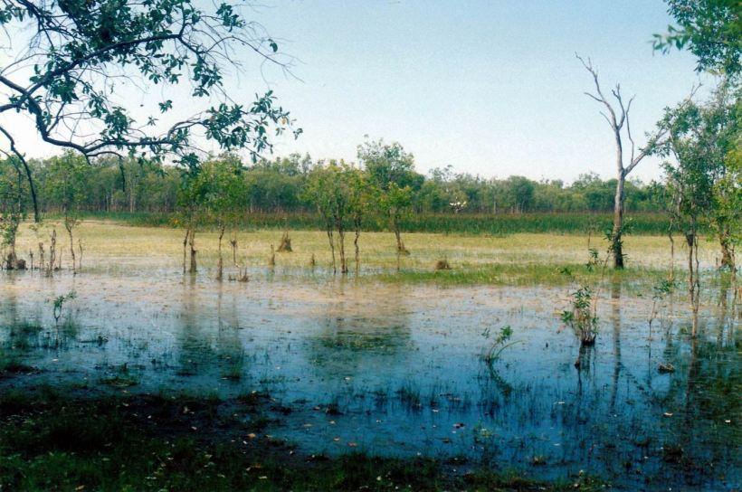 Resize of 09-20-2003 06 a pungalina wetland.jpg