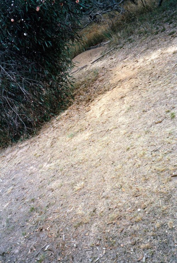 Resize of 04-27-2004 ant path nest.jpg