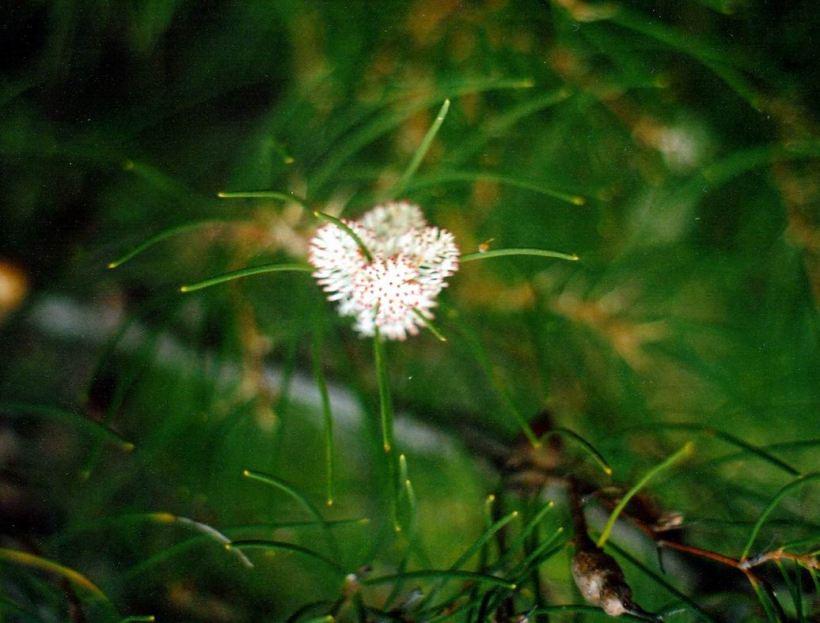 Resize of 05-06-2004 04 hakea