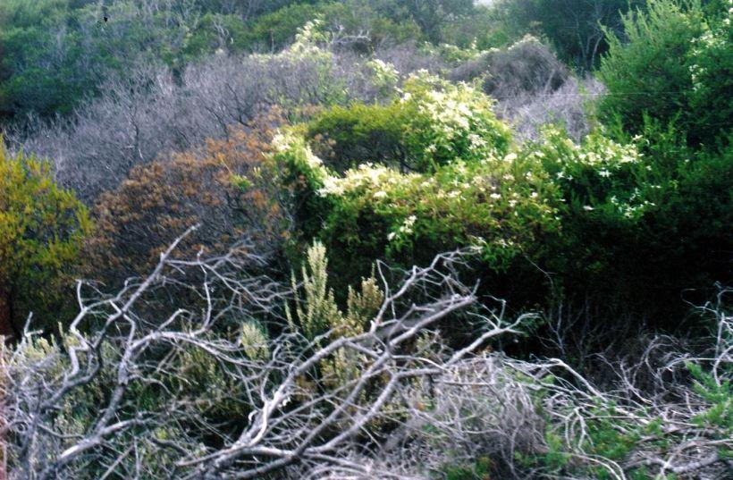 Resize of 05-06-2004 bush.jpg
