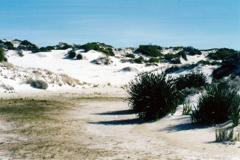Resize of 05-07-2004 03 seal creek behind dunes