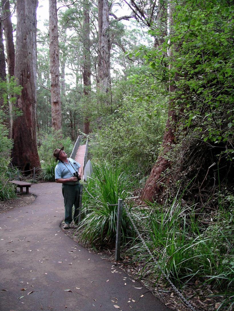Resize of 05-20-2004 15 giant tingle trees