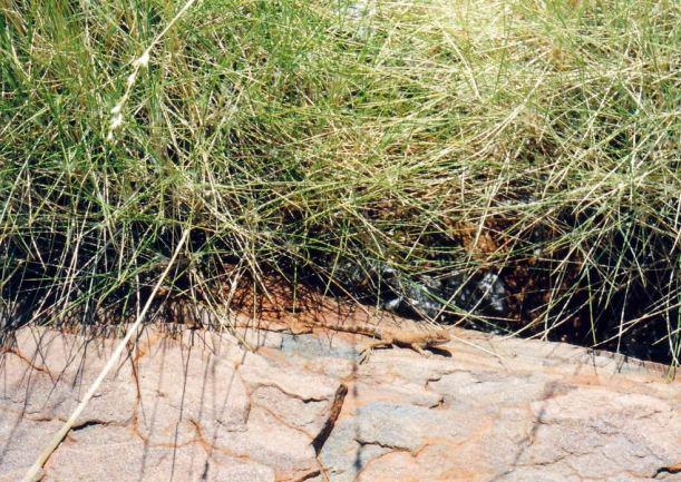 Resize of 07-14-2004 reptile.jpg