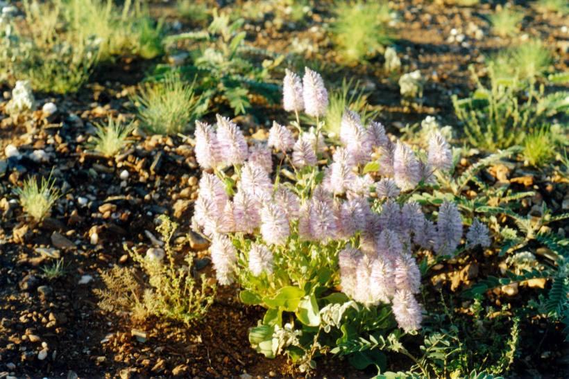 Resize of 07-26-2004 16 mulla mulla