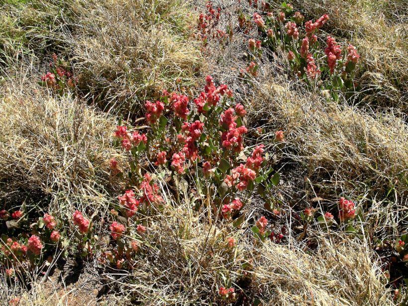 Resize of 09-04-2004 02 Hops Bush.JPG