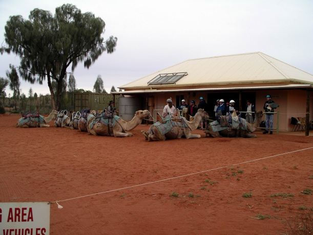 Resize of 09-05-2004 01 Ayers Rock Camel Rides 1.JPG